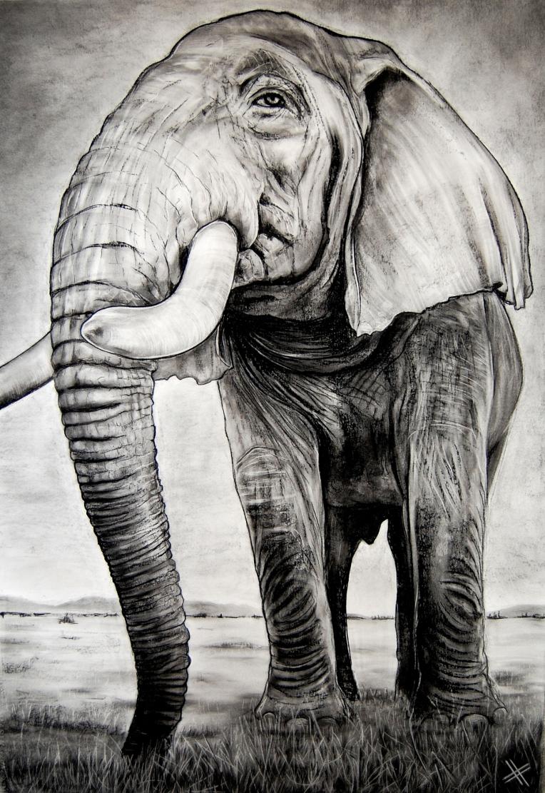 Elefante es.JPG